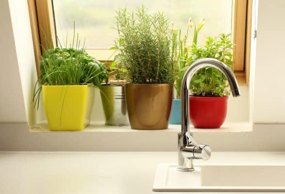 Potted herbs in kitchen windowstill