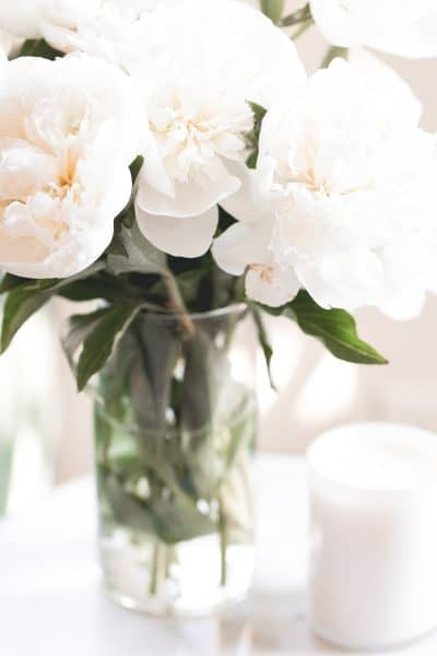 close up of a vase of peonies