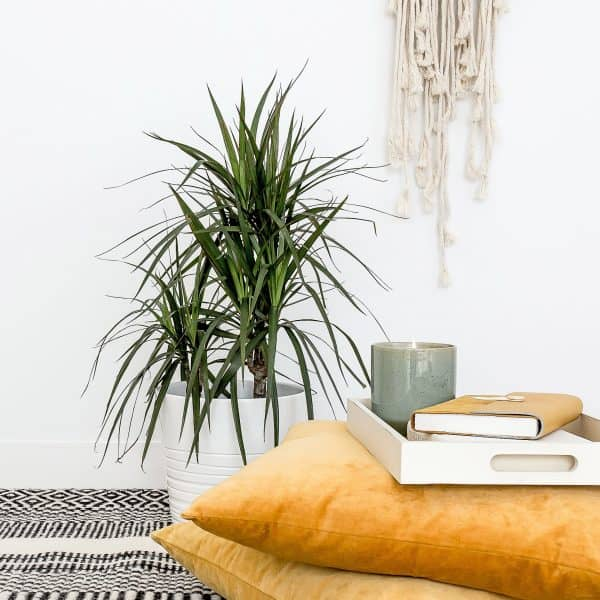 cozy hygge reading corner with yellow pillows, plants, and a wall hanging